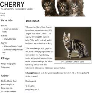 Cherry Maine Coon